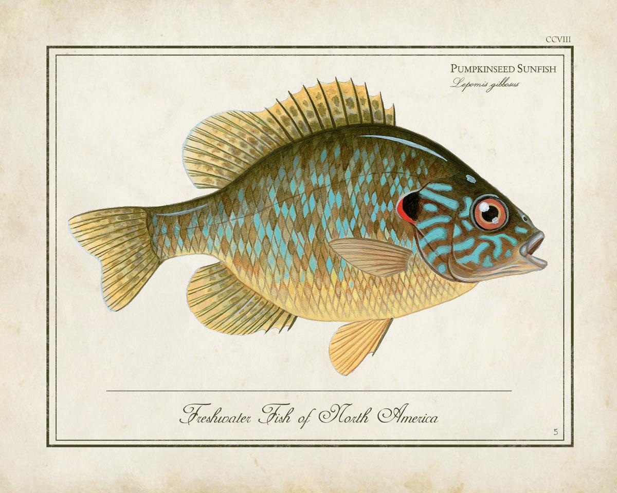 via pinterest.com/jfaganfished/fishes/ - pescato fresco