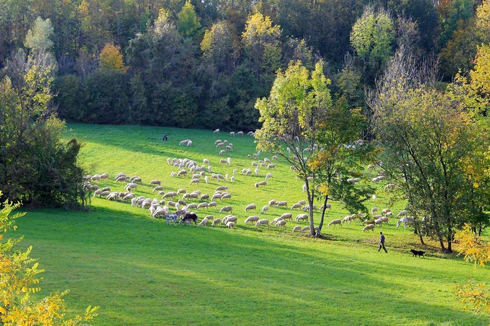 Dove nascono le canzoni di Fosca: le montagne fuori Belluno