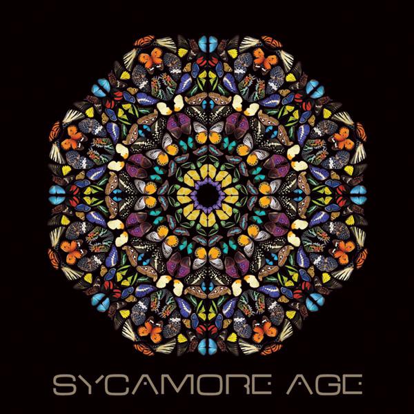 Sycamore_Age