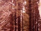 28-bergen-foresta