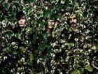 zen-circus-nuovo-album-canzoni-contro-natura-uscita-gennaio-2014.jpg