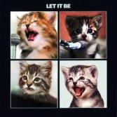 Bellissime copertine di dischi reinterpretate da gattini