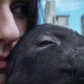 Video première: Lapingra - Porco Mondo