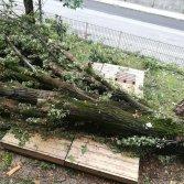 Il palco del Social Garden di Cas'Aupa, schiacciato da un albero