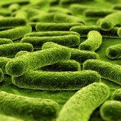 dati, I microbi suonano canzoni bepop