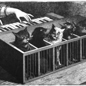 museo, un Cat Piano