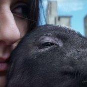 anteprima, Un'immagine del video di Porco Mondo dei Lapingra
