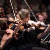 orchestra, orchestra.jpg