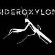 Sideroxylon Ep 2011