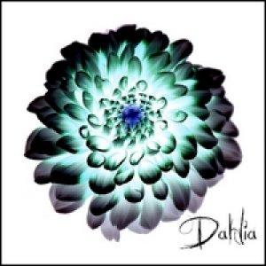 album Dahlia - DAHLIA