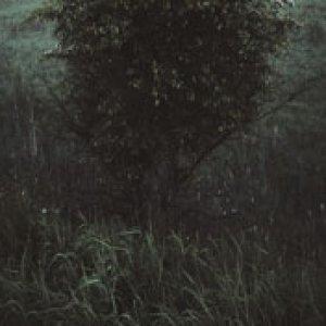 album Hints - Lloyd Turner
