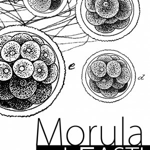 album Morula - I Fasti