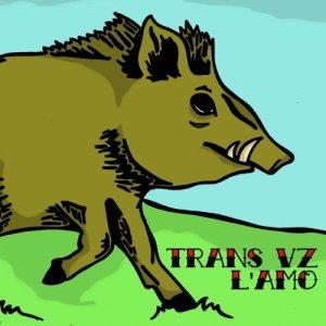 album Trans VZ / L'AMO - Split