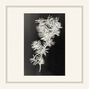 album Taxus Baccata EP - Casa del Mirto
