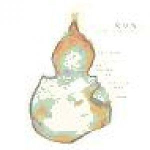 album La Zuccha Polmonate - R.U.N.I. (Runi)