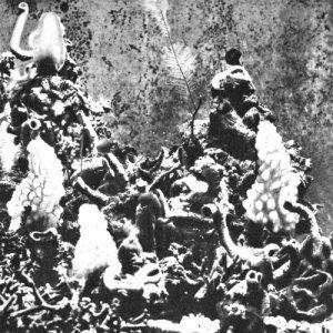 album Fiume Nero - donato epiro