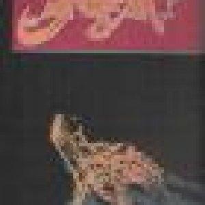 album Subire sublime - Kubla
