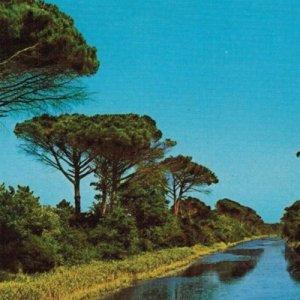 album PINARELLA BLUES - IL LUNGO ADDIO