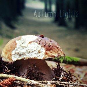 album AUTUMN LIGHTS - DEM Rockblues Trio