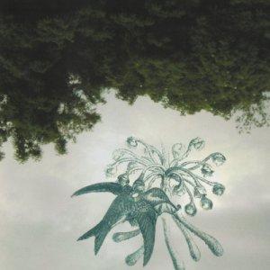 album Dietas para no existir chapter V:Stevanin tesi per la fine del problema di dio - Lute