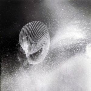 album Homoheterogeneity - raccoglimento Parziale