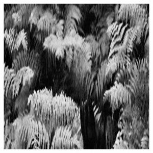 album Giungla (Single) - Gouton Rouge