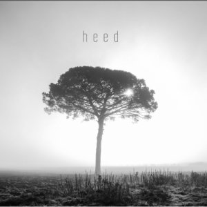 album Heed - Ginkgo Dawn Shock