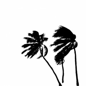 album INTRO - Coconutscale