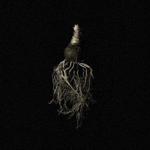 Pashmak Indigo EP copertina