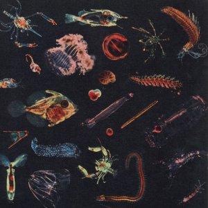 album Plancton - Alessandro Fiori