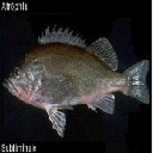 album Subliminale - Atròphia