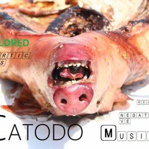 album CATODO (Really Nagative Music) - ColoredParticles