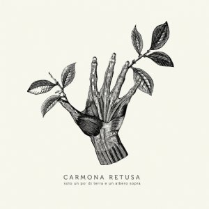 album Solo un po' di terra e un albero sopra - Carmona Retusa