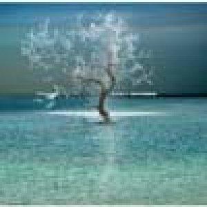 album Unisono - Ashes
