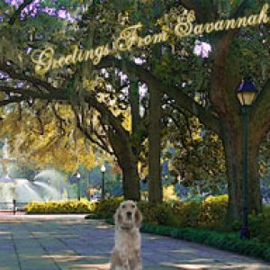 album Greetings From Savannah - Jack Water