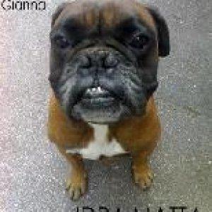 album Idra Matta - Shopping Gianna