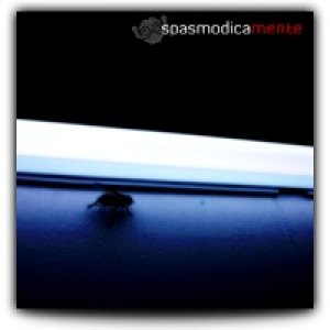 album Spasmodicamente [demo] - Spasmodicamente