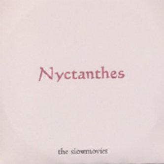 Nyctanthes