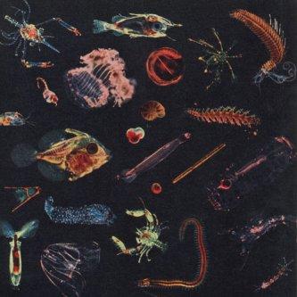 Copertina dell'album Plancton, di Alessandro Fiori