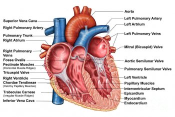 Mezz'ora di musica al giorno contro gli infarti