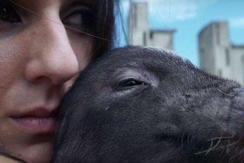 """Un'immagine del video di """"Porco Mondo"""" dei Lapingra"""