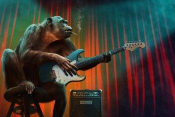 Un cantautore che è una scimmia ammaestrata? Nessuno ha detto questo. Foto di Peter Fischer