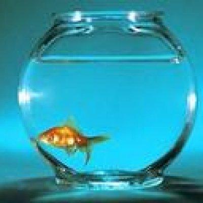 The Monkfish Yellow Glass Ascolta