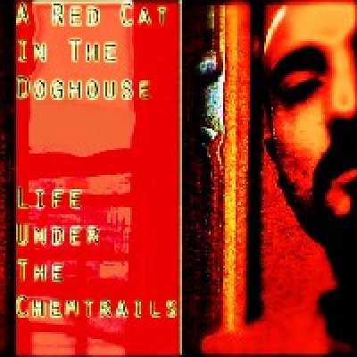 Tutti i video di A Red Cat In The DogHouse