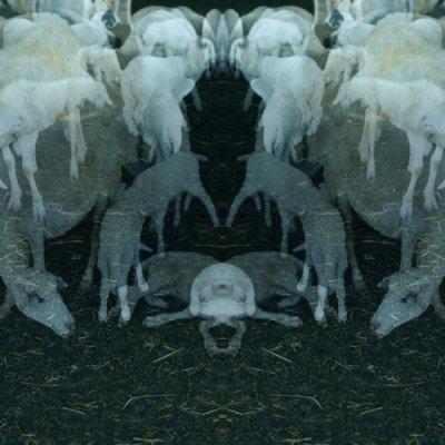 album ANTICO - Alfio Antico