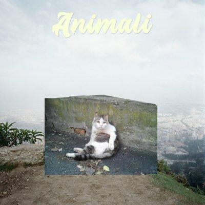 album Animali - i randagi