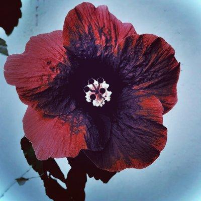 album bloom ATLANTA