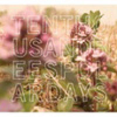 album Polar Days Ten Thousand Bees