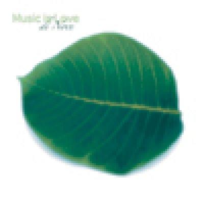 album di Noce - Music is Love